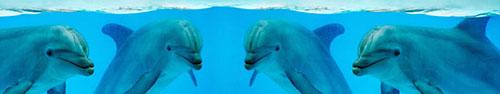 Скинали - Улыбающиеся дельфины