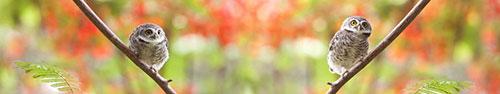 Скинали - Пятнистые совята на ярком фоне