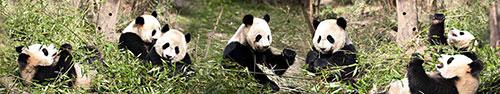 Скинали - Панды отдыхают