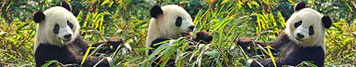 Скинали - Милые панды