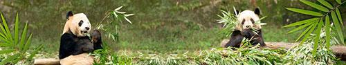 Скинали - Панды с листьями бамбука