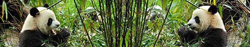Скинали - Панды с бамбуком