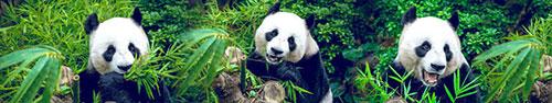 Скинали - Панды кушают листья бамбука