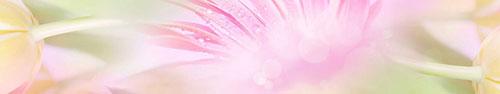 Скинали - Нежная абстракция с росой на лепестках