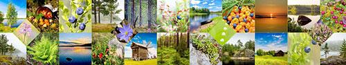 Скинали - Коллаж из фотографий красот и даров природы Карелии