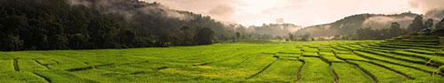 Скинали - Рисовые террасы рано утром