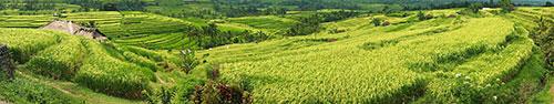 Скинали - Рисовые поля Джатилувих на о.Бали - Всемирное наследие ЮНЕСКО