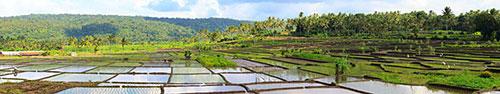 Скинали - Рисовые поля, полные воды, в солнечный день на о.Бали