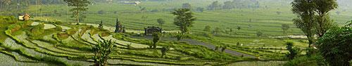 Скинали - Долина с рисовыми террасами
