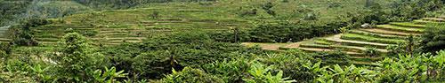 Скинали - Панорама рисовых полей на о.Бали