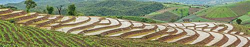 Скинали - Рисовые поля в сезон дождей, Таиланд