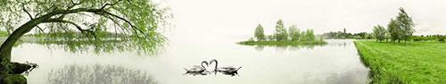Скинали - Нарисованные лебеди на озере