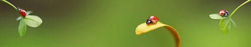 Скинали - Божьи коровки крупным планом на листиках