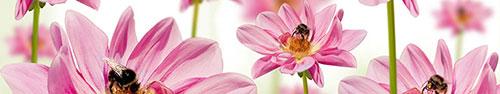 Скинали - Пчелки на розовых герберах
