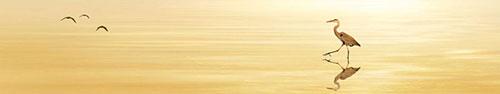 Скинали - Цапля шагает по воде