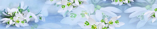 Скинали - Нежные подснежники на голубом фоне