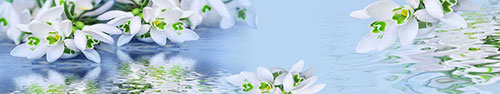 Скинали - Нежные подснежники на голубом фоне с отражением