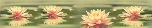 Скинали - Нежные водяные лилии