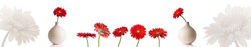 Скинали - Яркие красные герберы на белом фоне