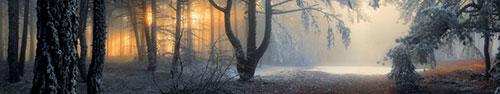 Скинали - Туманный лес на рассвете