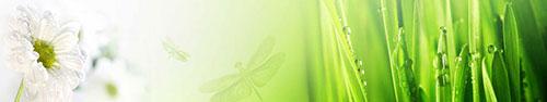 Скинали - Трава с росой и белая ромашка