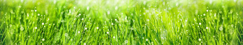 Скинали - Трава с росой