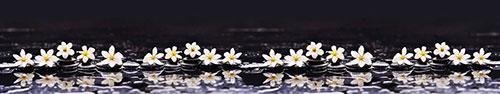 Скинали - Гардения жасминовидная на камушках спа