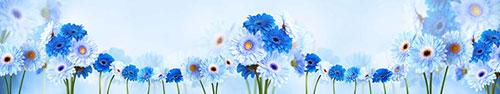 Скинали - Нежные голубые и синие герберы