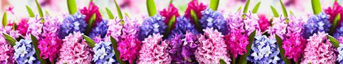 Скинали - Гиацинты разного цвета
