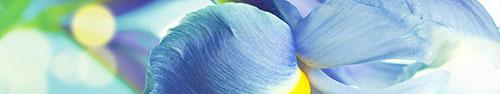 Скинали - Голубая эйфория