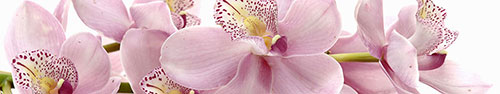 Скинали - Сиреневые орхидеи на прозрачном фоне