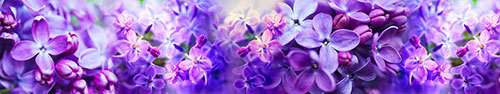 Скинали - Фиолетовая сирень крупным планом