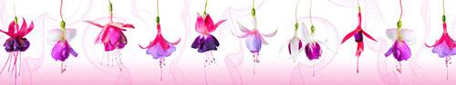 Скинали - Цветы фуксии на светло-розовом фоне