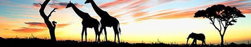 Скинали - Жирафы и слоны рано утром