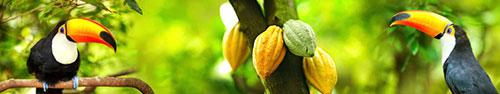 Скинали - Туканы среди какао деревьев