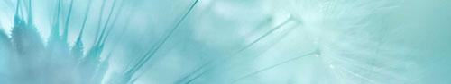 Скинали - Нежный фон с одуванчиком