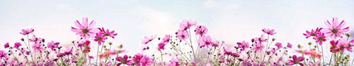 Скинали - Полевые цветы на фоне неба