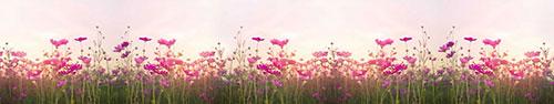 Скинали - Розовые цветы в поле
