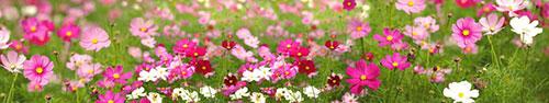 Скинали - Яркие полевые цветы