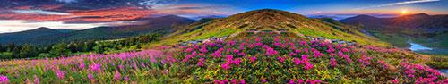 Скинали - Рассвет над цветочным лугом