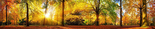 Скинали - Теплые лучи солнца в осеннем лесу