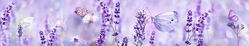 Скинали - Различные бабочки на полевых цветах