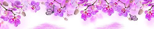 Картинки по запросу орхидея на белом фоне