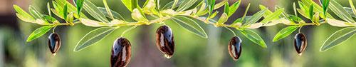 Скинали - Черный оливки на веточках в солнечный день