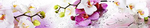 Скинали - Веточки орхидей на каплях воды