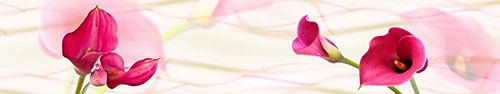 Скинали - Пурпурные каллы на светлом фоне