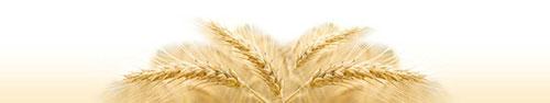 Скинали - Пшеница в солнечном свете