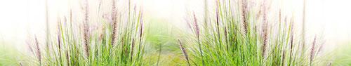 Скинали - Нежные полевые цветочки в траве