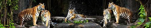 Скинали - Тигры на отдыхе