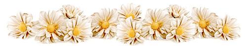 Скинали - Бежевые цветочки на белом фоне